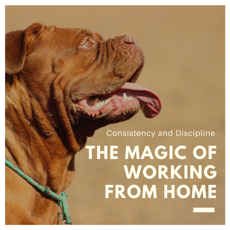 Consistency and Discipline the Magic of Working from Home